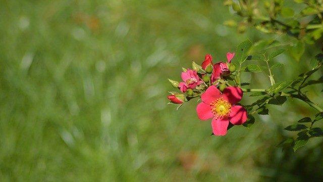 flor - verano