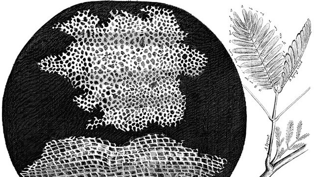 Células - Micrographia